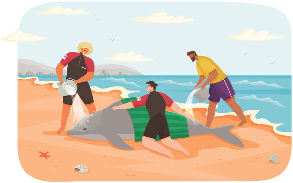 Social workers rescue dolphin on beach. Volunteers pour water on animal and cool it down to save