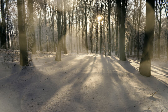 Surreal winter forest on Christmas day