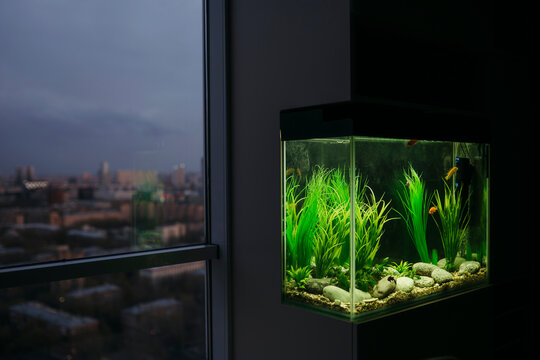 Modern interior with an aquarium.
