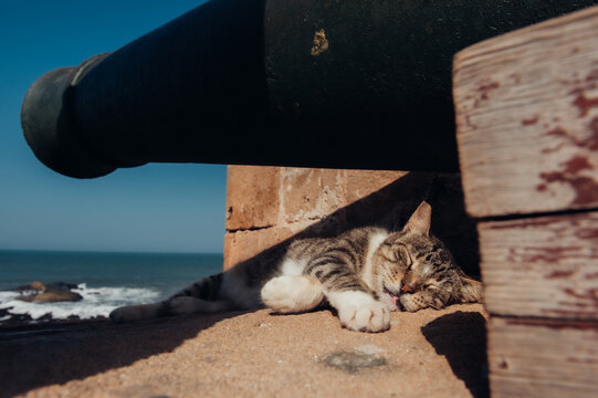 cat sleeping under a cannon in moroccan old fortress