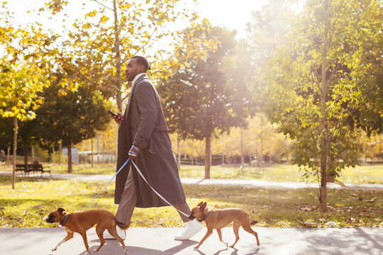 Ethnic man walking with dogs in autumn park
