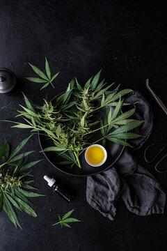 Cannabis oil + Fresh plants