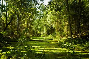 Las zielony, krajobraz przyrody.