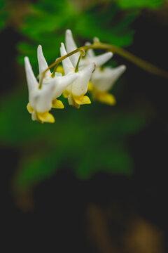 Wildflowers of Pennsylvania