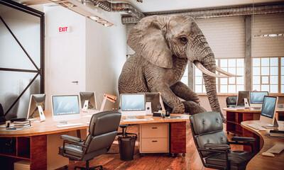 big elephant sitting inside an office.