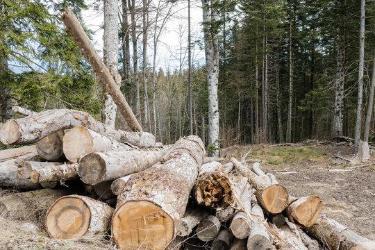Arbres abattus dans une forêt