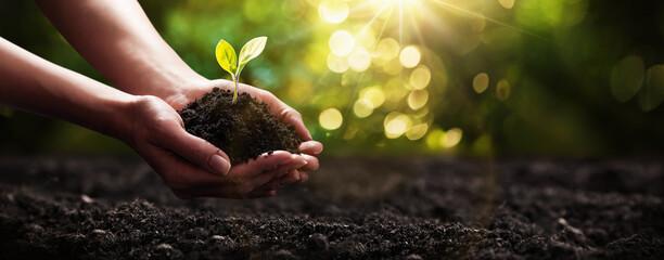 Fototapeta Plant in Hands. Ecology concept. Nature Background obraz