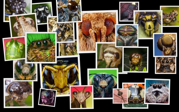 Insect Bug Eyes Collage