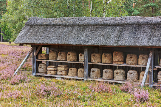 Bienenzaun mit traditonellen Bienenkörben bei Undeloh in der Lüneburger Heide, Niedersachsen