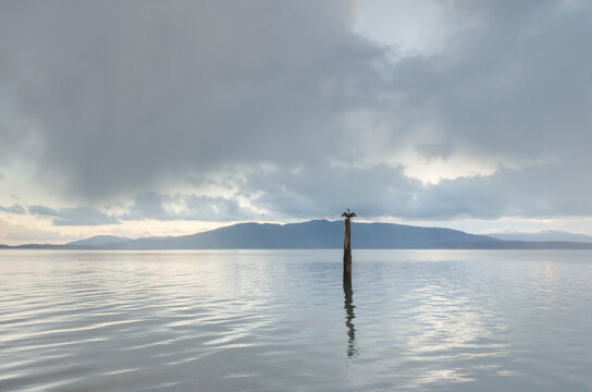 Cormorant perched on piling in Bellingham Bay, Washington State. Lummi Island in the distance