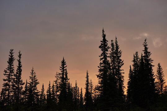 Silhouetted trees in countryside, Chicken, Alaska, United States