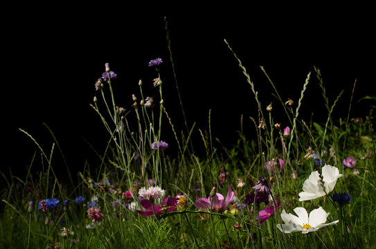 Field with wild flowers at night