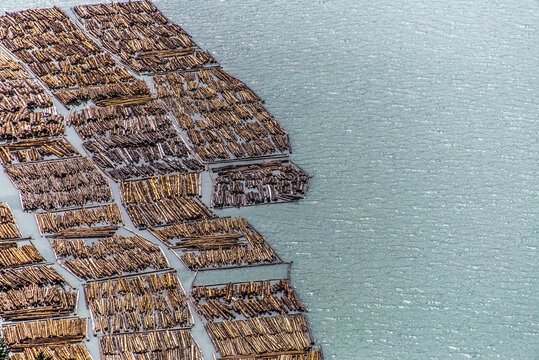 Logs floating in sea, Squamish, British Columbia, Canada