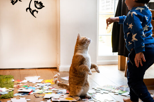 Young child playing indoors with ginger tabby cat.