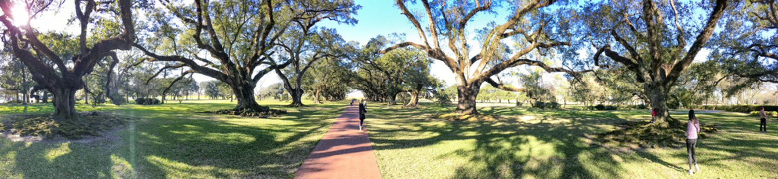 Oak Alley plantation trees on a beautiful sunny day, Louisiana - Panoramic view
