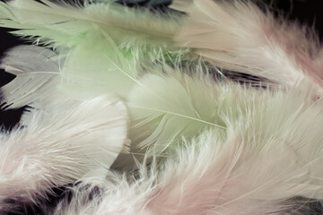 Closeup detail of pastel green and pink feathers on a black background
