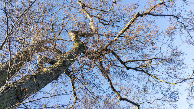 Bear tree branches reaching up to a blue sky