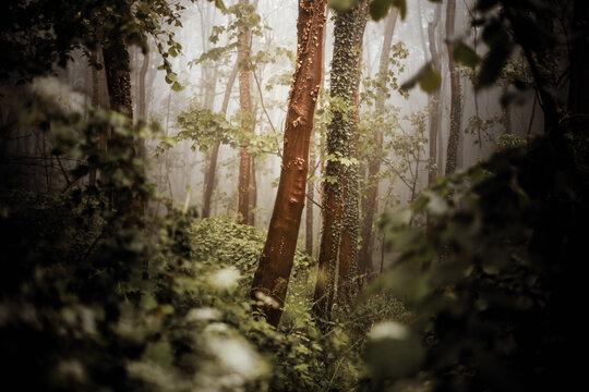 Wald mit Nebel bei Sonnenaufgang