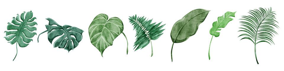 熱帯植物の手描き水彩風イラスト - fototapety na wymiar