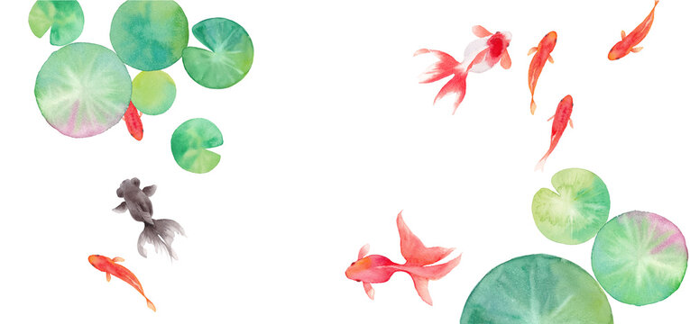 金魚と睡蓮の葉で構成した夏のバナー背景。水彩イラストのトレースベクター。レイアウト変更可能。