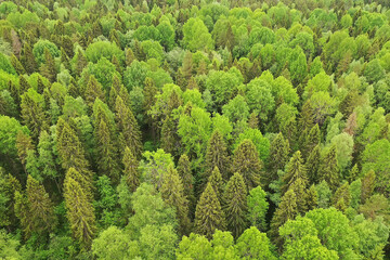 forest top view, landscape panorama view of summer forest with quadrocopter aerial view