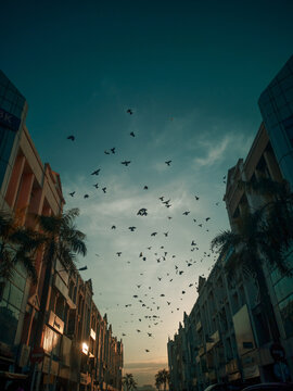 Low Angle View Of Birds Flying Over Buildings In City