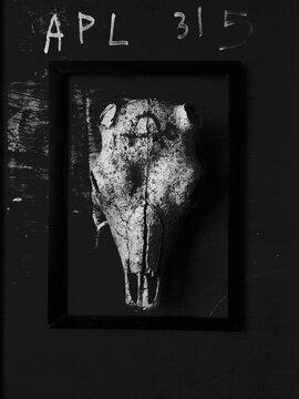 Animal Skeleton Framed On Wall
