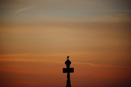 Silhouette Of A Bird Against Sky During Sunset