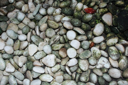 White Stones And Mossy Stones Are In One Place