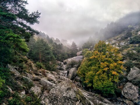 Hiking A Rocky Mountain Surrounded By Pine Trees And Fog