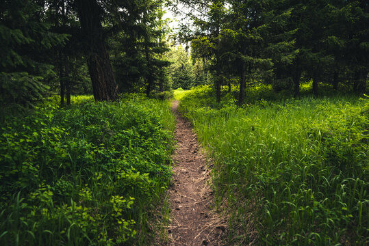 Hiking path in the woods.