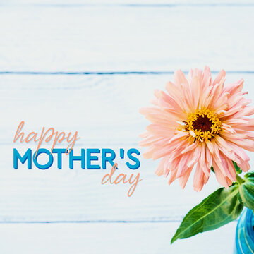 Happy Mother's day zinnia flower on white wood background for mom holiday during spring.
