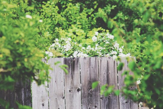 Wooden Fence Surrounded By Plants