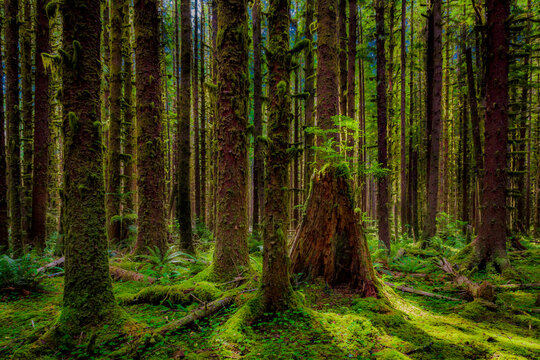 Deep Forest - Olympic Natl Park, WA