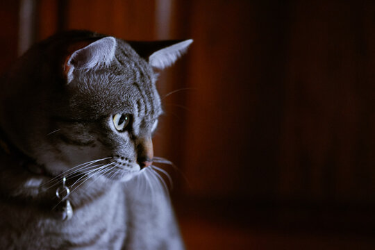Close-up Portrait Of A Cat Looking Away