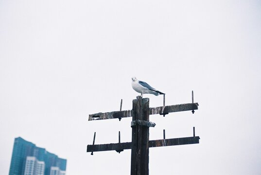 Low Angle View Of Seagull Perching On Weather Against Clear Sky