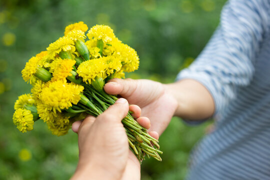 Cropped Image Of Hand Holding Yellow Flowers