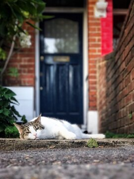 Portrait Of Cat Lying Down On Retaining Wall