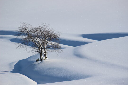 Bare Tree On Snow Covered Field