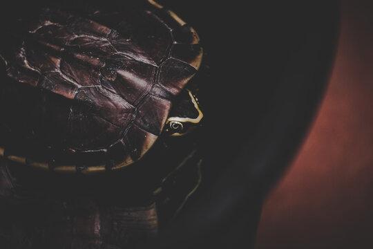 The Turtle On Dark Background