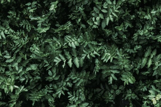 Green Leaves Background. Aesthetic Green.