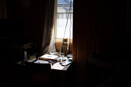 Cat Sitting Amidst Messy Table Against Window At Home