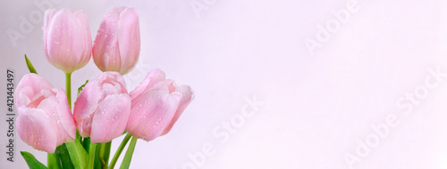 A bouquet of pink tulips on a light background with copy space. Congratulations on women's or mother's day. Banner