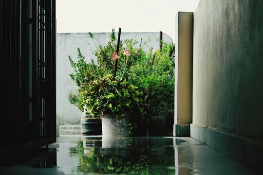 Potted Plants In Balcony Of Building