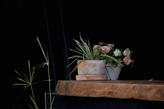 Potted Plant On Table Against Black Background