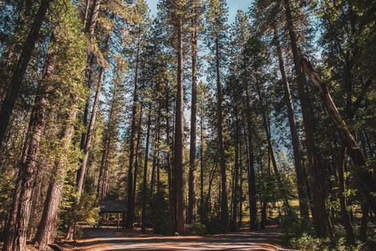 Road Less Traveled - Yosemite National Park