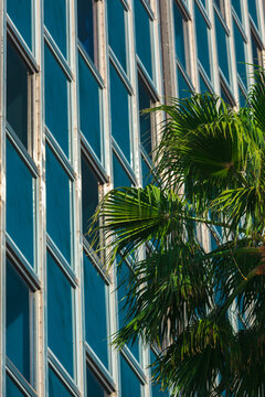 Glass Facade Pattern Of A Contemporary Office Building With Palm Tree