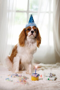 Dog Puppy Birthday Party Cavalier King Charles Spaniel Dogs Party Time 1st Birthday