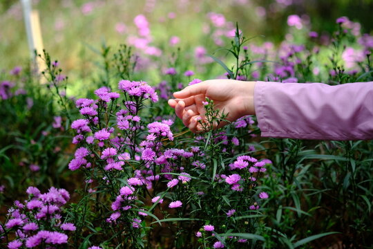 Cropped Hand Of Woman Touching Flowers