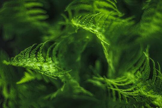Full Frame Shot Of Fresh Green Fern Leaves